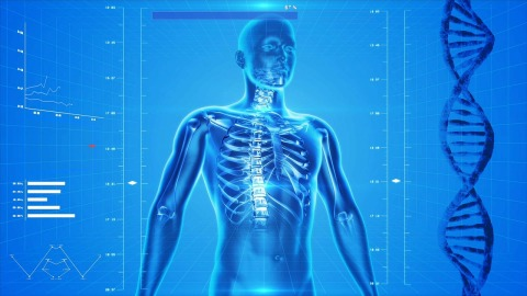 The Human Body X-ray Anatomy People Human Skeleton